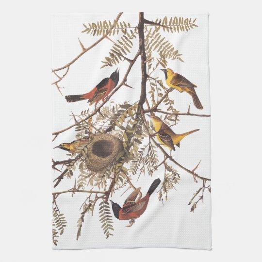 Audubon's Orchard Oriole Birds Nesting in Tree Kitchen Towel