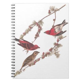 Audubon's Purple Finch Red Birds on Conifer Tree Notebook