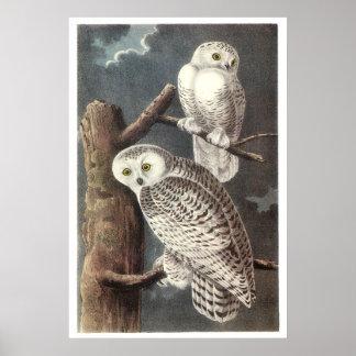 Audubon's Snowy Owl Poster