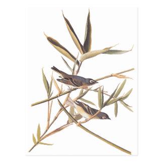 Audubon's Solitary Flycatcher Postcard