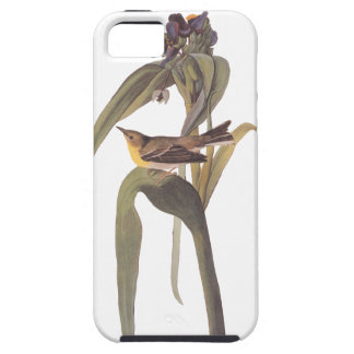 Audubon's Vigor's Vireo Case For The iPhone 5