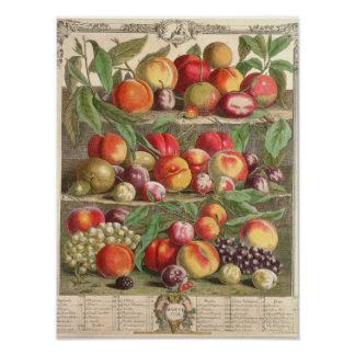 August, 'Twelve Months of Fruits' Poster