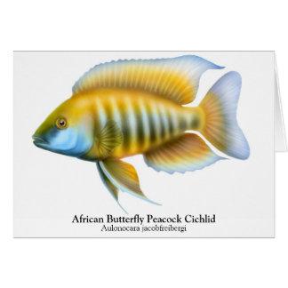 Aulonocara jacobfreibergi Peacock Cichlid Card