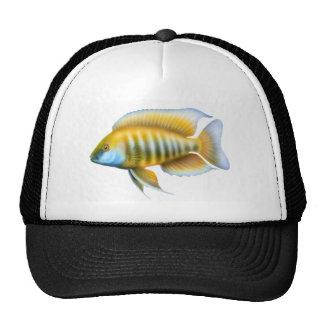 Aulonocara jacobfreibergi Trucker Hat