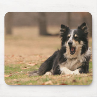 Aussie Shepherd Dog  Mouse Pad