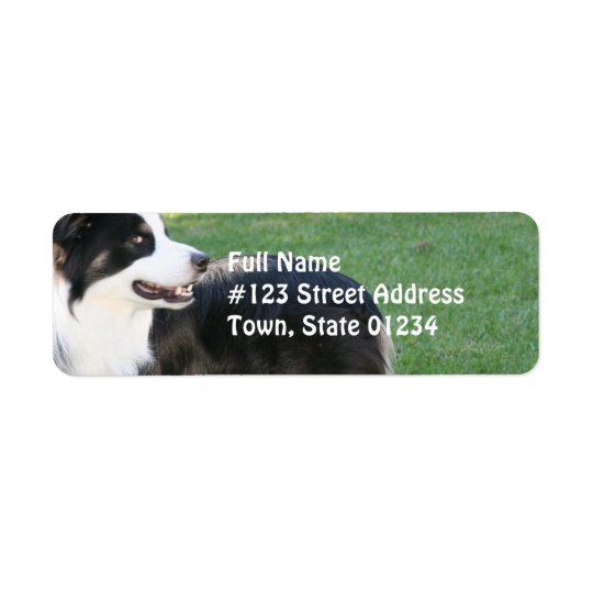 Aussie Shepherd Return Address Mailing Labels