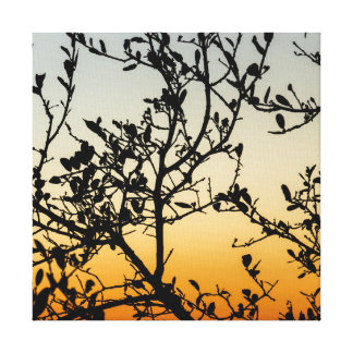Austin Sunset in Winter Canvas Print