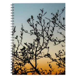 Austin Sunset in Winter Notebook