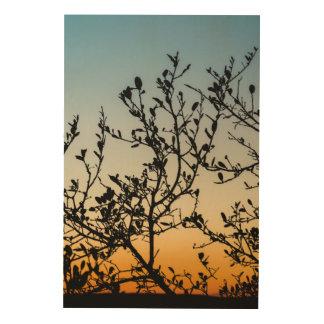 Austin Sunset in Winter Wood Print