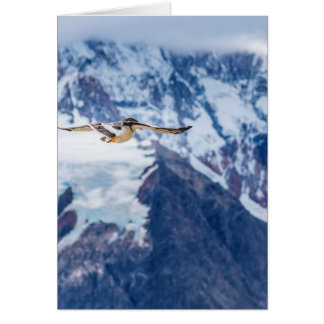 Austral Patagonian Bird Flying Card