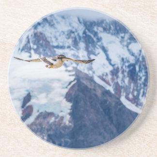 Austral Patagonian Bird Flying Coaster