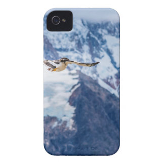 Austral Patagonian Bird Flying iPhone 4 Case-Mate Cases