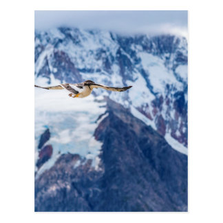 Austral Patagonian Bird Flying Postcard