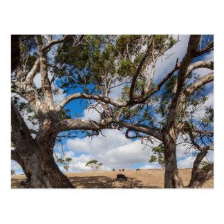 Australia, Fleurieu Peninsula, Normanville Postcard