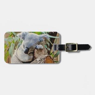 Australia Koala Bear Sleep Luggage Tag