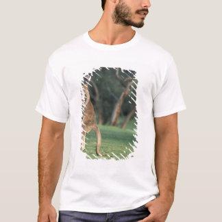 Australia, Vic. Kangaroo on the Anglesea Golf T-Shirt