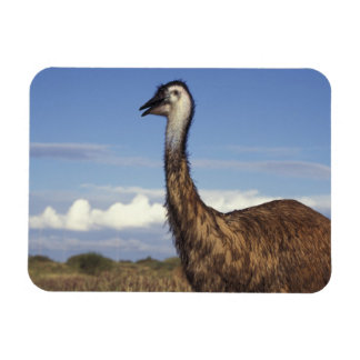 Australia, Western Australia. Emu (Dromaius Magnet