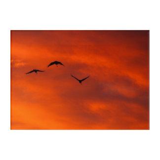 Australian brolgas flying at sunset acrylic wall art