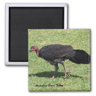 Australian Brush (Bush) Turkey Magnet