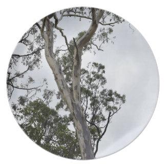 AUSTRALIAN BUSH QUEENSLAND AUSTRALIA PLATES