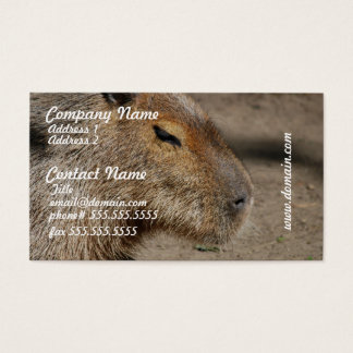 Australian Capybara Business Cards