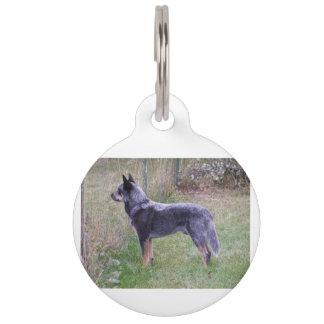 Australian_Cattle_Dog_blue full Pet ID Tag