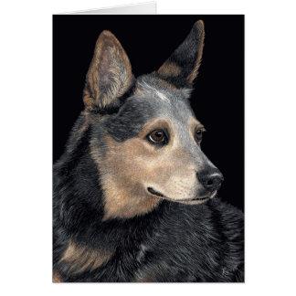 "Australian Cattle Dog Card - ""Quigley"""