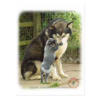 Australian Cattle Dog pup with Alaskan Malamute Postcard