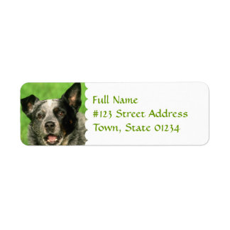 Australian Cattle Dog Return Address Label