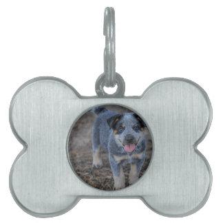 Australian Cattle Puppy Dog Pet ID Tag