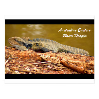Australian Eastern Water Dragon Postcard