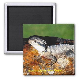 Australian Eastern Water Dragon Square Magnet