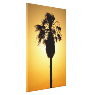 Australian Fan Palm sunset silhouette canvas print