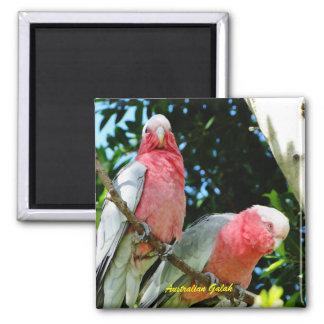Australian Galah - Roseate Cockatoo Square Magnet