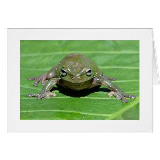 Australian Green Tree Frog Card