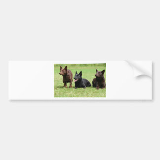 Australian Kelpie Puppies Bumper Sticker