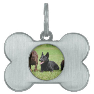 Australian Kelpie Puppies Pet ID Tags