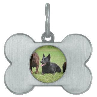 Australian Kelpie Puppies Pet Name Tag