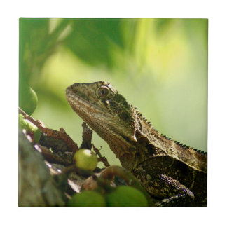 Australian lizard between leaves, Photo Ceramic Ceramic Tiles
