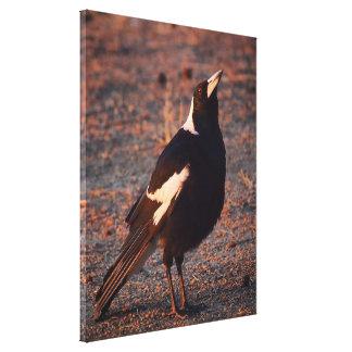 Australian Magpie canvas print