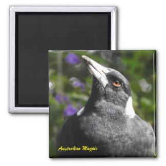 Australian Magpie Square Magnet