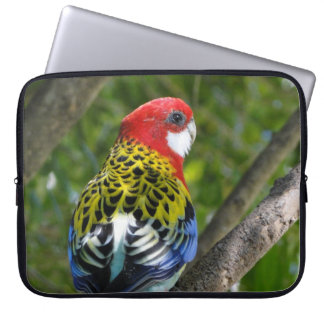 Australian Male Eastern Rosella Laptop Computer Sleeves