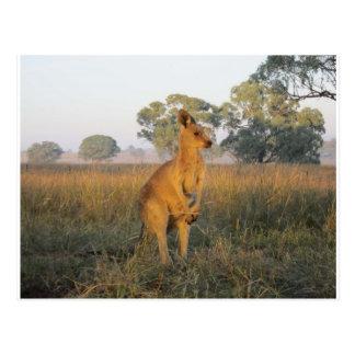 Australian Morning Product Range Postcard