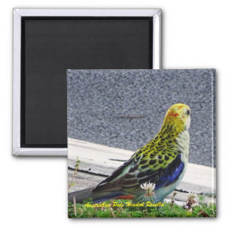 Australian Pale Headed Rosella Magnet