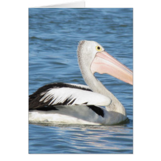 Australian Pelican Card
