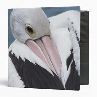 Australian pelican close up 3 ring binder