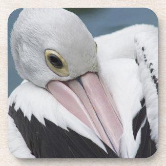 Australian pelican close up coaster