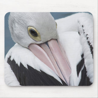 Australian pelican close up mouse pad