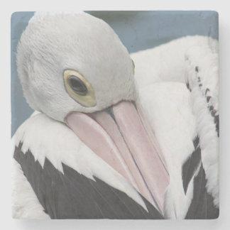 Australian pelican close up stone beverage coaster