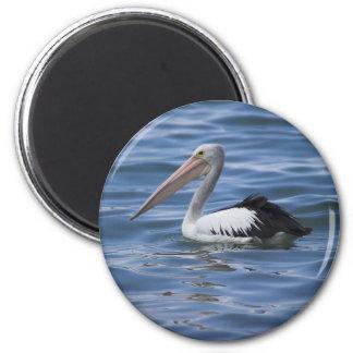 Australian Pelican Magnet